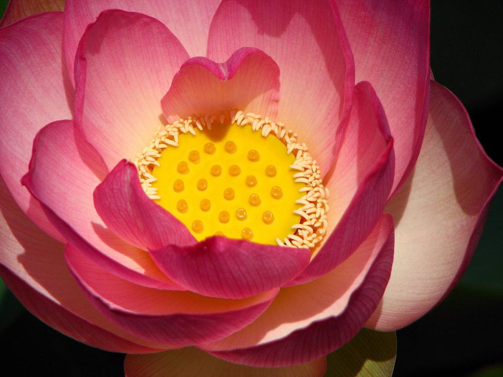 Alicia Explores The Secret Meaning Of The Lotus Flower