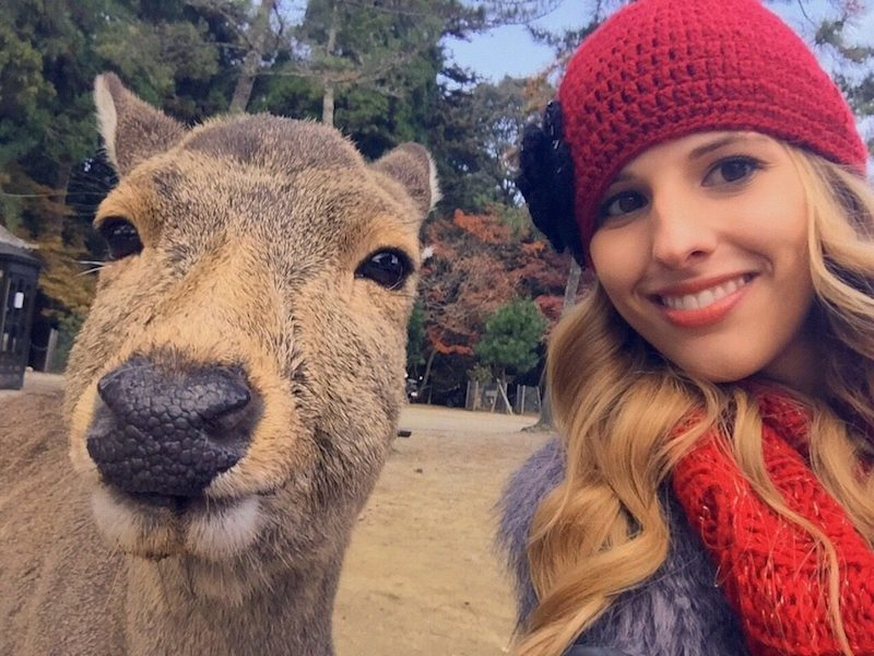 観光客の自撮りにうんざりする奈良公園の鹿 「鹿の本音が表れている」写真が話題 [無断転載禁止]©2ch.net->画像>14枚